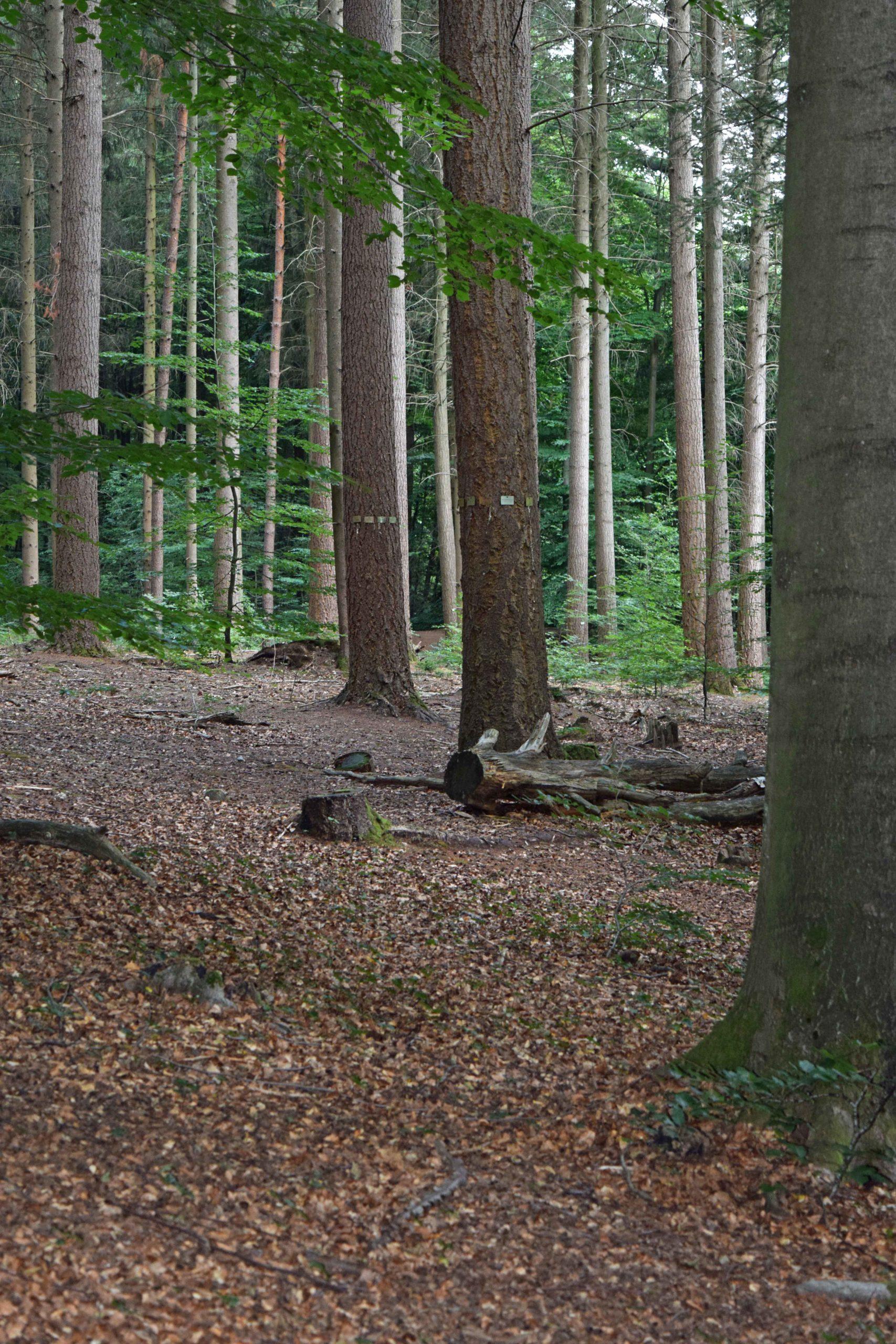 Bestattungsbäume