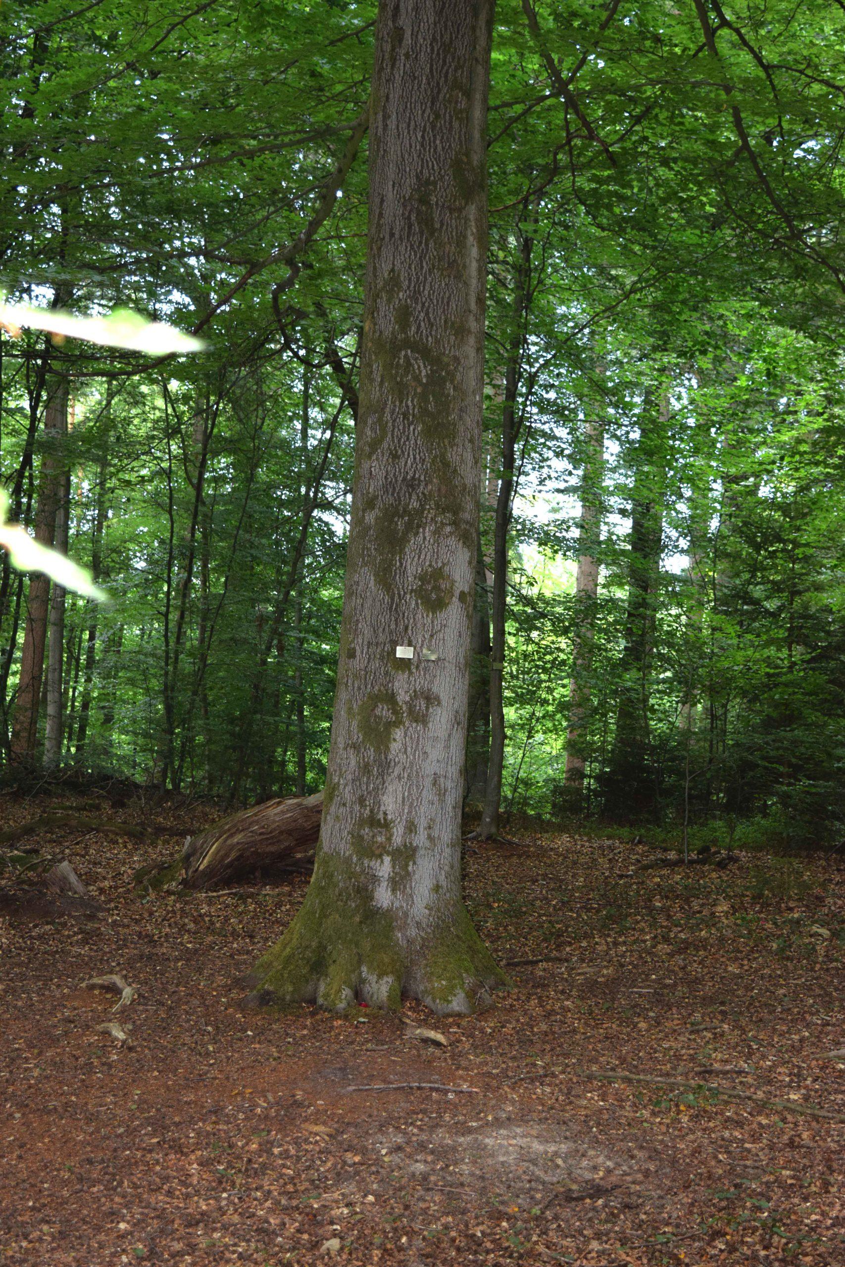 Bestattungsbaum