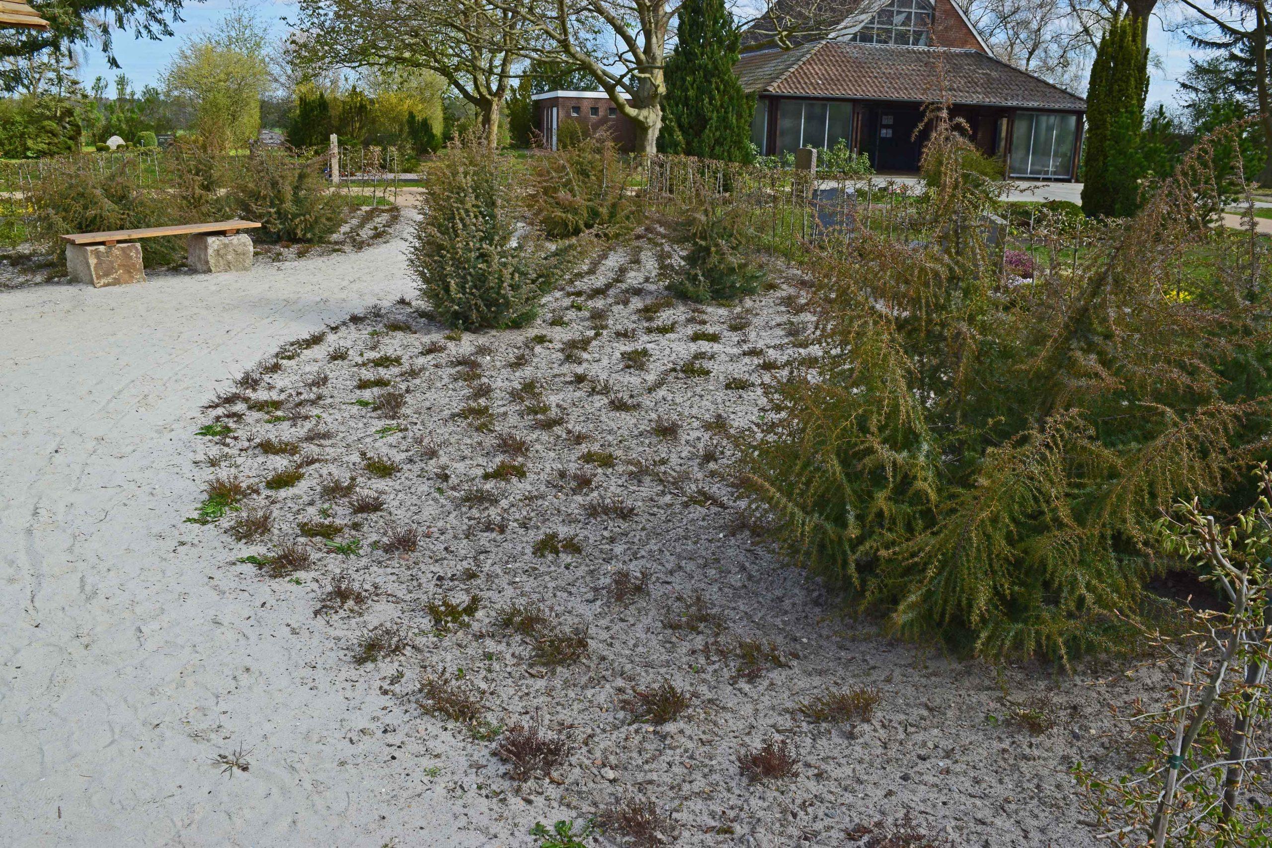 Heidefläche - Wachholder